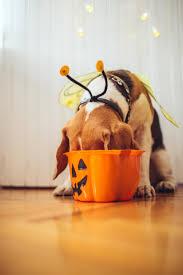 halloween puppies wallpaper cute puppies enjoy fall southern living