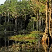 Florida Natural Attractions images Florida landforms natural attractions usa today jpg