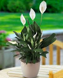 Plants That Survive With No Light 40 Best Plants No Sunlight Needed Images On Pinterest