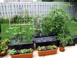 these 5 self watering planters make vegetable gardening easy