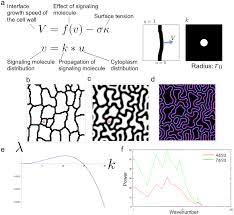 plos computational biology a theoretical model of jigsaw puzzle