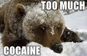 Coke Bear Meme - cocaine animals