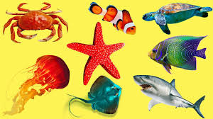 animal names for kids aquatic animals in english aquatic
