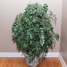 potted artificial tree ebth
