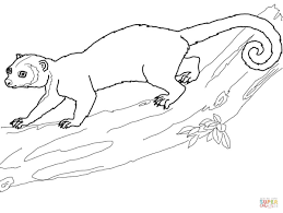 kinkajou on a tree coloring page free printable coloring pages