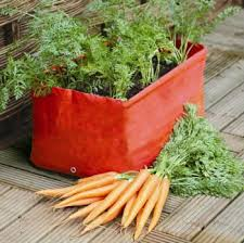 how to grow carrots in containers the easy way with great results