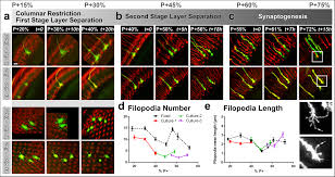 filopodial dynamics and growth cone stabilization in drosophila