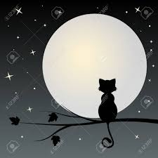 silhouette of black cat on the tree looks with moon royalty