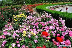 Beijing Botanical Garden Tourists View Roses In Beijing Botanical Garden 10