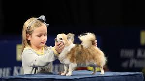 how to the 2017 national show on thanksgiving see the