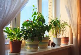 home interior plants 4 plants to in your home to make you happier food matters