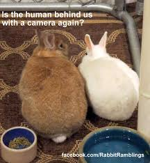 Funny Rabbit Memes - hilarious funny rabbit memes daily funny memes