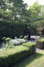 Garden Tree Types - types of arborvitae growth rate and drought tolerance