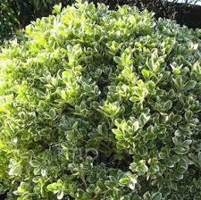 329 best gardening shrubs images on pinterest diy landscaping
