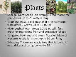 Tropical Savanna Dominant Plants - tropical savanna