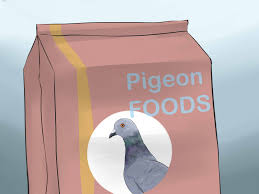 How To Get Rid Of Pigeons On My Roof by How To Tame Pigeons To Be Out Of Cage Permanently With Pictures