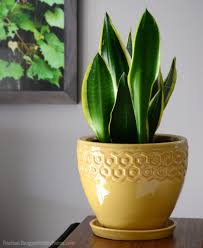 Plants To Grow Indoors 3 Easy To Grow Houseplants To Boost Indoor Health Hobby Farms