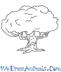 how to draw an oak tree