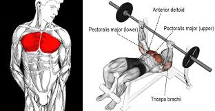 decline bench press muscles decline bench press exercise guide tips fitness and power
