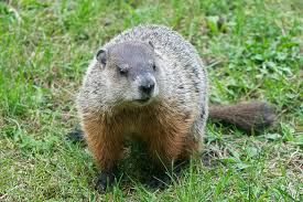 science groundhog visionlearning blog