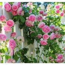 Garden Express Summer Catalogue - uncategorized growing roses in the desert