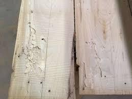 Powder Post Beetles In Hardwood Floors - what ate my wood