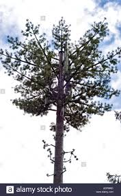 Fake Tree by Mobile Phone Mast