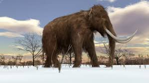 2d animation motion graphics showing woolly mammoth mammuthus