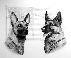 belgian shepherd ohio german shepherd police dog belgian malinois drawing pet portraits