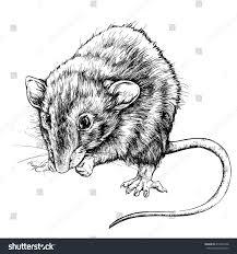 sketch small rat vector illustration stock vector 410423338
