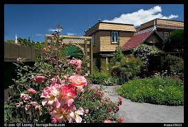 picture photo roses in backyard winchester mystery house san