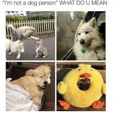 Pet Memes - a look into some of the best dog memes taking over the internet