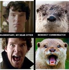 Cumberbatch Otter Meme - benedict cumberbatch et al and otter look a likes pun intended