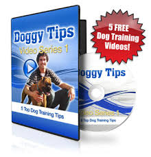 australian shepherd training tips understanding the confusion of the aussiepoo aussiedoodle and