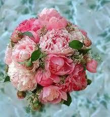 bulk peonies charm peonies flowers in bulk peony