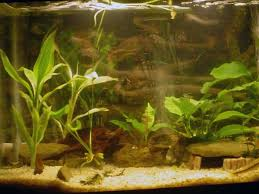 Asian Themed Fish Tank Decorations Tropical Fish Tanks Page 20