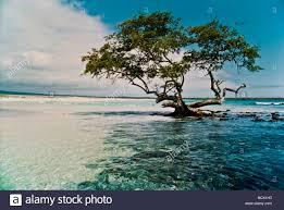tree island water peace symbols scenic trees beauty colorful