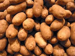 potato free stock photo image picture potatoes tubers