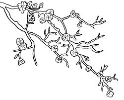 cherry blossom coloring pages download free printable coloring pages