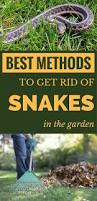 best methods to get rid of snakes in the garden getgardentips com