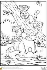 coloriage dessin kangourou en ligne gratuit à imprimer
