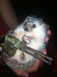 Hedgehog Meme - machine gun hedgehog teh cute