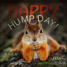 Best Day Meme - most funny hump day meme