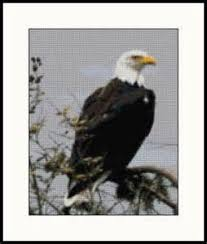36 best cross stitch eagles images on eagles