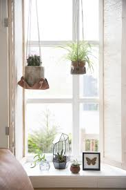 Inside Home Plants by 608 Best Decorating W Houseplants Images On Pinterest