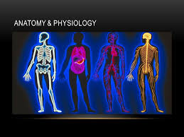 Human Anatomy Words Human Anatomy Terminology Ppt Video Online Download