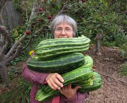winter veggies now