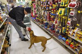 california may require pet shops sell only rescue dogs cats cbs