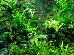 freshwater fish pond singapore freshwater fish pond specialist