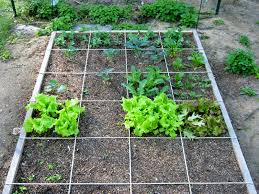 planting u2013 update winter sowing and square foot garden u2013 minding